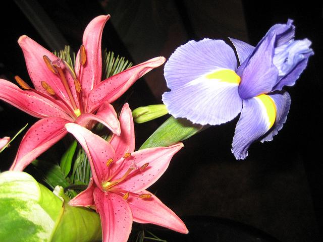 cvećare beograd