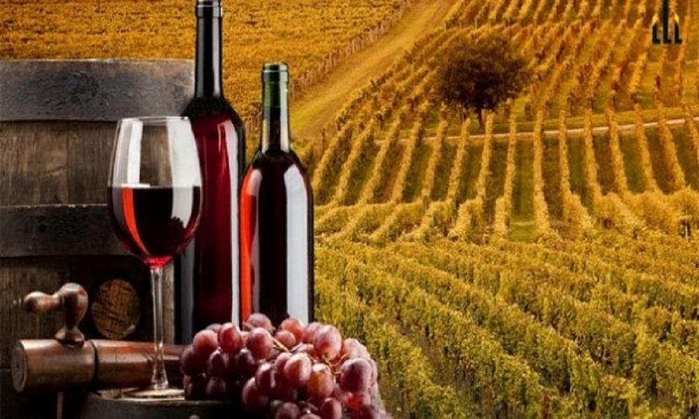 kraljeva vinarija oplenac