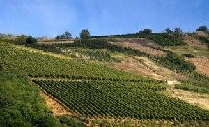 Župa Aleksandrovac vinarije